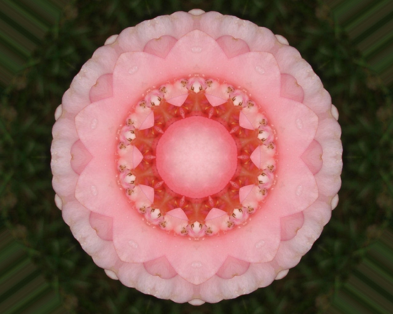 Pin By Carolyn Pranke On Fractals And Other Forms Of: Unconditional Love Rose Mandala
